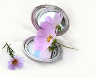 Mirror and flower's Royalty Free Stock Image