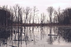 Mirror Image Landscape. Of trees reflected in the still water of a swamp Royalty Free Stock Images