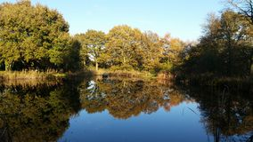 Mirror image. Large pond providing a mirror image of the surrounding trees Stock Photography