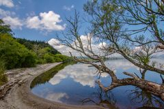Mirror Image. Almost a mirror image of the surroundings in the water. This lake near Rotorua New Zealand in a mid spring day is reflecting the shoreline and royalty free stock photo