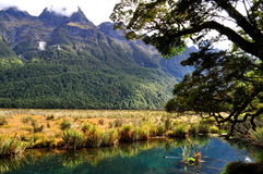 Mirror Lake close to Milford Sound, New Zealand. Reflection in Mirror Lake close to Milford Sound, New Zealand Royalty Free Stock Photos