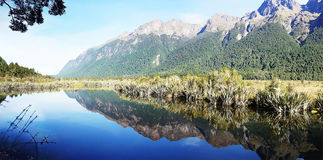 Mirror Lake Fiordland. Picture of Mirror Lake in Fiordland Stock Images