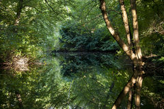 The mirror of the forest lake Neuer Stock Photos