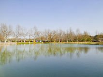Mirror Lake. With tree's reflection in the water inside century park Shanghai China Royalty Free Stock Photography