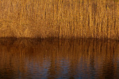 Mirror like reflection of reeds in the water. Reed reflecton in river creates abstract patterns royalty free stock photo