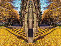 Mirror pattern from tree alley trees with shadows in golden autumn Royalty Free Stock Images