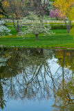 Mirror Pond Reflecting Trees in the Spring Royalty Free Stock Photo