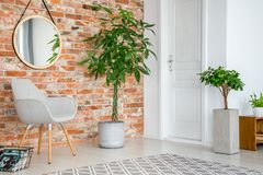 Mirror on red brick wall above grey armchair and plant in living room interior with door. Real photo royalty free stock photography