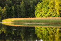 Mirror reflection. Of trees in water royalty free stock photography