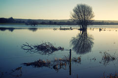 Mirror reflections of landscape in flood plains in Winter Royalty Free Stock Photos
