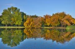 Mirror trees Royalty Free Stock Image