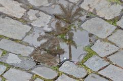 The mirror of water between the stones. In an inner street, still of stone, I come across a can of the water, and as she walked she revealed to me some very tall Stock Photos