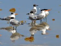 Mirrored birds Stock Image