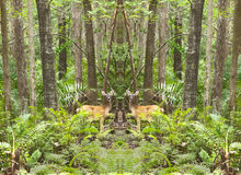 Mirrored Deer in the forest Stock Photography