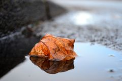 Mirrored leaf Stock Photography