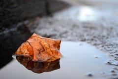Mirrored leaf Stock Image