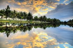 Free Mirrored Palm Reflection Royalty Free Stock Photography - 54929067