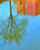 Mirrored trees and building in water Royalty Free Stock Images