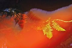 Mirroring the fern in red peat-bog creek Stock Photo