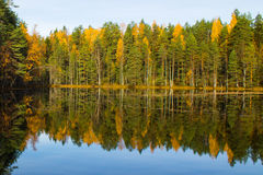 Mirroring forest lake Stock Photos