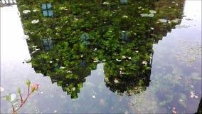 Mirroring_1 stock footage