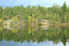 Mirroring the trees Royalty Free Stock Photography