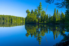 Mirrrored forest, sawbill lake, bwcaw Royalty Free Stock Images