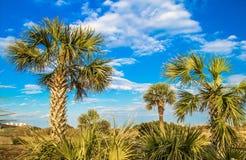 Mirt plaży wybrzeże obrazy royalty free