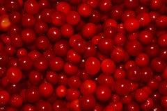 Mirtilli rossi Immagini Stock Libere da Diritti