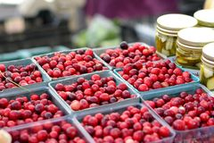 Mirtilli rossi al mercato degli agricoltori Fotografia Stock Libera da Diritti