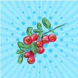 Mirtilli rossi con le foglie su un ramo su un fondo blu Illustrazione di vettore Disegnato a mano in Pop art di stile Alimento di Fotografia Stock