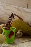 Mirtilli rossi e funghi Fotografia Stock Libera da Diritti