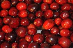 Mirtilli rossi freschi in acqua fotografia stock