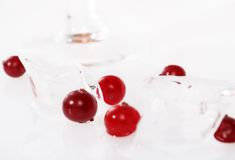 Mirtilli rossi in ghiaccio Fotografia Stock Libera da Diritti