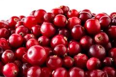 Mirtilli rossi macro. Fondo dell'alimento fotografie stock libere da diritti