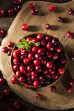 Mirtilli rossi rossi organici crudi Fotografia Stock Libera da Diritti