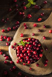 Mirtilli rossi rossi organici crudi Fotografia Stock