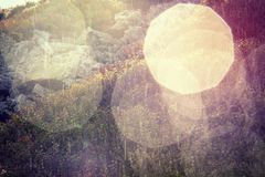 Mirtillo Bush su Rocky Upland in pioggia fotografia stock