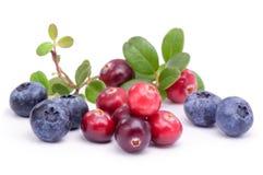 Mirtillo ed uva di monte con le foglie verdi Immagine Stock
