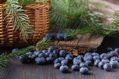 Mirtillo su fondo di legno Antiossidante del mirtillo Concetto per il cibo e la nutrizione sani fotografie stock libere da diritti