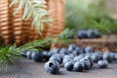 Mirtillo su fondo di legno Antiossidante del mirtillo Concetto per il cibo e la nutrizione sani fotografia stock libera da diritti