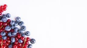 Mirtilos maduros e corintos vermelhos Bagas vermelhas e azuis Imagens de Stock