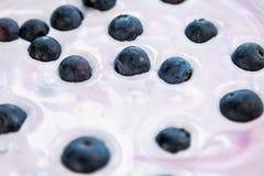 Mirtilos maduros no iogurte natural Fotos de Stock Royalty Free
