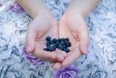 Mirtilos nas mãos Imagem de Stock