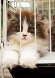 Mis en cage image stock