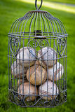 Mis en cage vers le haut du base-ball avec amour Photo stock