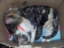 Mis gatos Foto de archivo libre de regalías