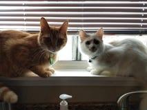 Mis gatos fotografía de archivo