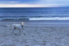 Mis patas en la arena de la playa Fotografía de archivo