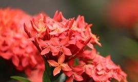 Mis Pequeñas flores royalty-vrije stock afbeeldingen